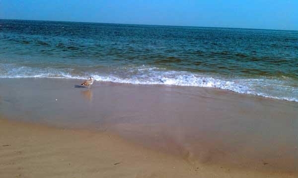 August 2010: Jones Beach, NY